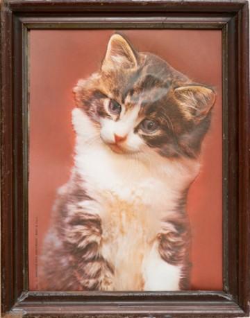Sammlungsobjekt Foto einer grau-braunen Katze mit weißem Bauch vor rotem Hintergrund sitzend, in Holz gerahmt